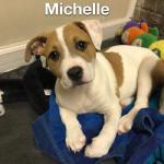 Michelle, 12-week-old, Terrier mix